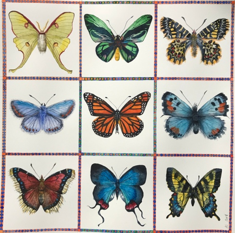 lepidoptera grid, by annabel carington