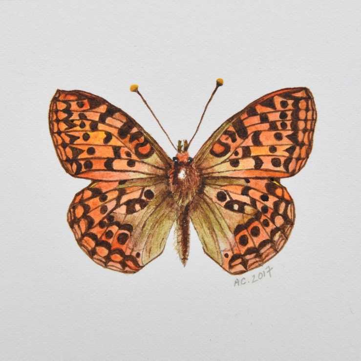 Dark Green Fritillary by Annabel Carington_PLUS signature