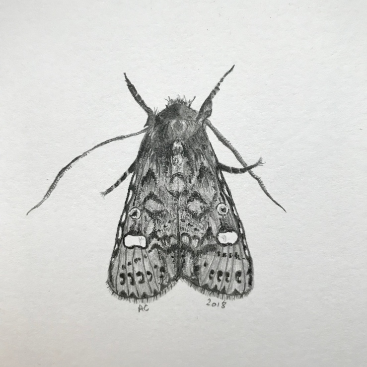 Dot Moth by Annabel Carington