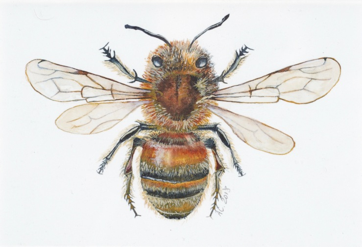 European Honeybee, by Annabel Carington
